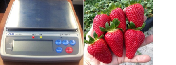 Super sweet results for Strawberry Grower